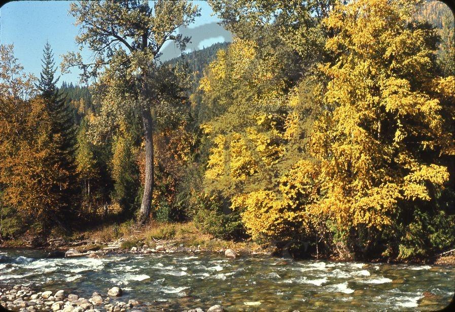 Birch Tree Wilson Creek Looking Across