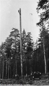 Trees of great length were needed to provide a spar on which to hook the rigging.